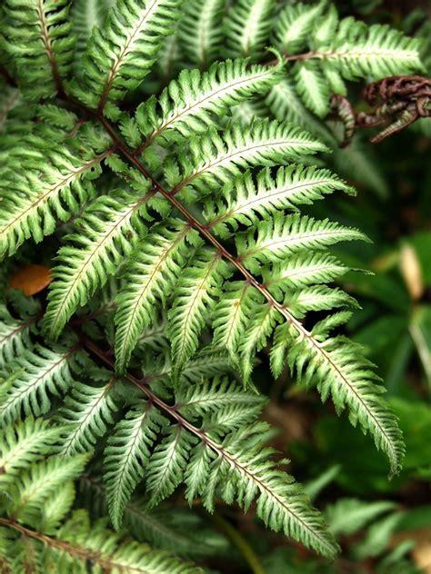 fern plants garden tips fern plants interior design inspiration