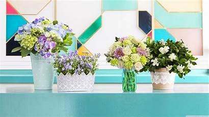Pastel Flowers Desktop 12k Wallpapers Ultra Uhd