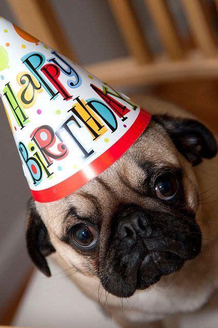 pug birthday happy birthday pug birthday pug happy