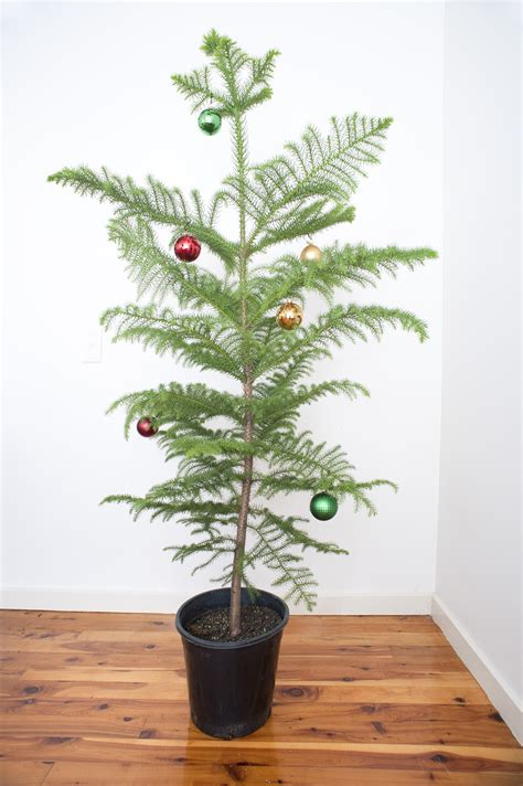 photo of christmas tree with simple decorations free