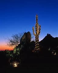 arizona cactus christmas lights