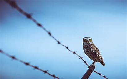 Fence Birds Wallpapers Backgrounds
