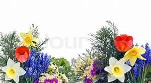 Aktuelle Blumen Im April : einfache collage postkarte mit fr hling april blumen stock foto colourbox ~ Markanthonyermac.com Haus und Dekorationen