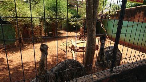 maharani zoo caves lamongan