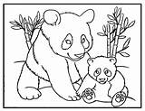 Panda Coloring Bear Pages Printable Sheet Activity Momma Pandas Colour Bears Mom Animal Template Instant Party Animals Children Pandacorn Cross sketch template