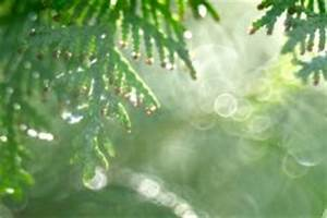 Zypresse Wird Braun : zypresse im k bel winterhart oder schutzbed rftig ~ Orissabook.com Haus und Dekorationen