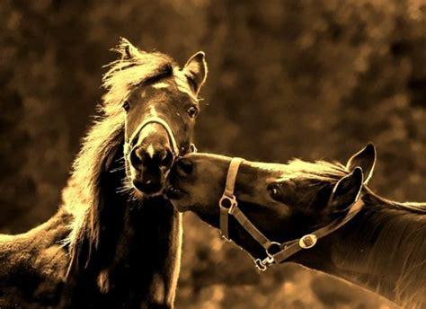 el apareamiento en los caballos roberto garrudo