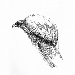 Different kinds of bird drawings, black and white, with ...