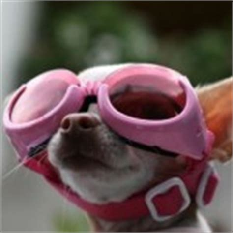 tierarztblogcom das unterhaltsame wissensportal fuer