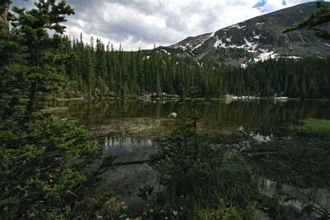 Colorado Rockies forests - Wikipedia