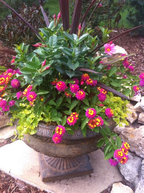 359 Best Outdoor Flower Container Ideas Images On