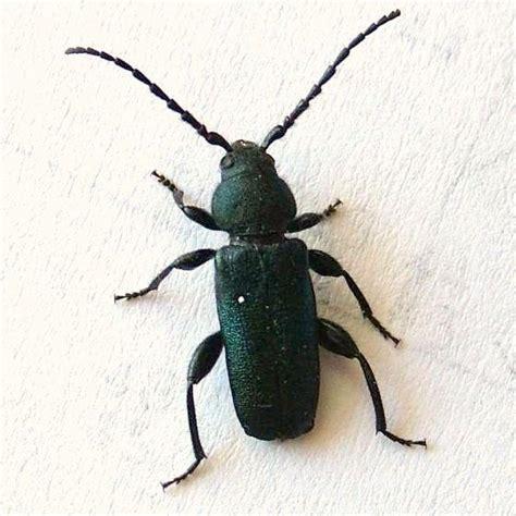 beetle house photo
