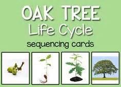 live oak preschool parts of a tree poster worksheet sb10351 sparklebox 323