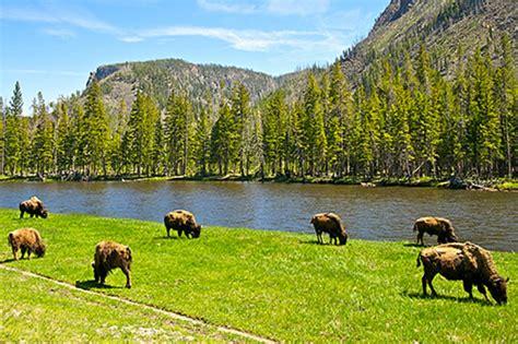 Yellowstone - Amerikas größtes Naturwunder: DVD oder Blu ...