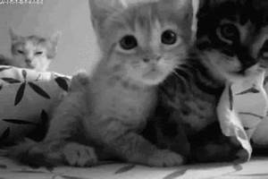 Kitten GIFs - Find & Share on GIPHY