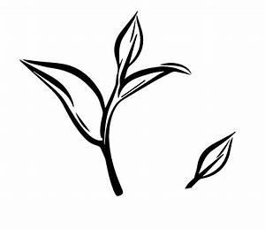 Tea Leaf Outline - ClipArt Best