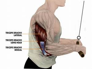 4 Triceps Exercises For Mass