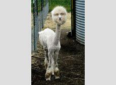Tierbilder Aushalten, nicht Lachen! Circus Halligalli
