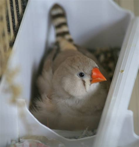 finches as pets zebra finches as pets by guest blogger chelsea of twfa students with birds