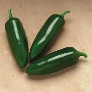 Jalafuego Hot Pepper Bonnie Plants
