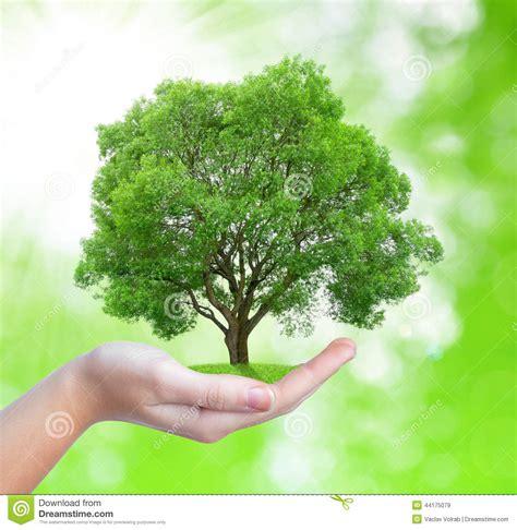 Growing Tree In Hand Stock Image Image Of Green, Garden