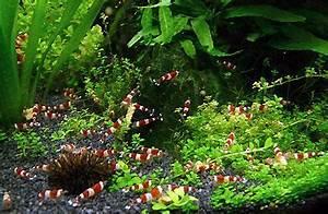 Aquarium Zubehör Günstig : nano aquarium kaufen tipps vergleichstest aquarium grundlagen ~ Frokenaadalensverden.com Haus und Dekorationen