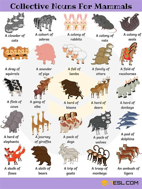 List of Mammals: Useful Mammal Names with Pictures