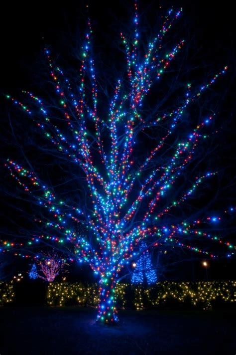 wrap lights  trees hometalk