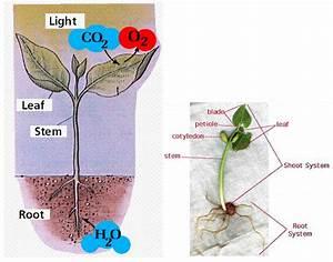 Bio11classification04 08