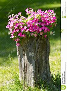 Petunia Flowers Grow On A Stump Stock Photo - Image: 41920522