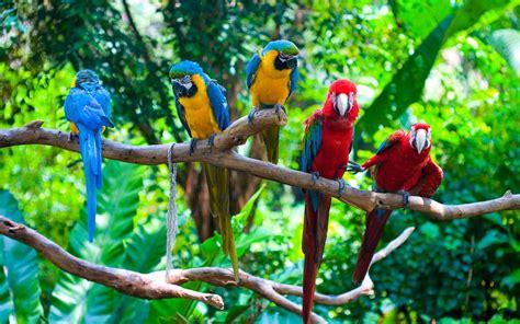 pc de bureau windows 7 wallpaper met papegaaien op tak bureaublad achtergronden