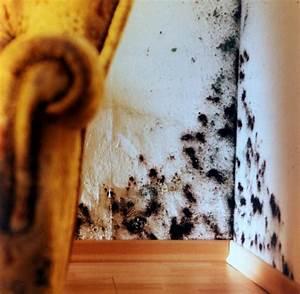 Wie Bekämpfe Ich Schimmel An Der Wand : mykotoxine versteckter schimmelpilz kann bewohner krank machen welt ~ Sanjose-hotels-ca.com Haus und Dekorationen
