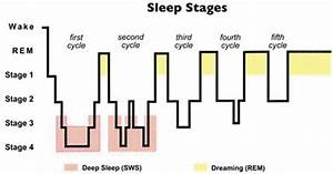 Normal Sleep Diagram