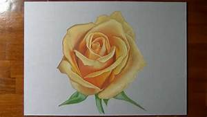 The gallery for --> Marcello Barenghi Rose