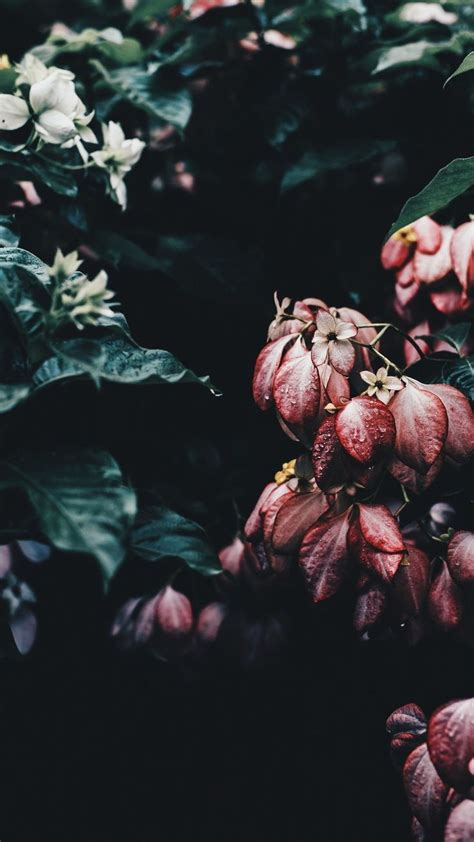 Aesthetic Iphone X Wallpaper Floral by Faded Floral Iphone Wallpaper Beautiful Floral