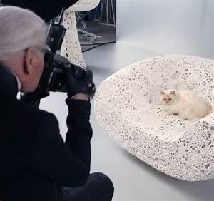 Choupette Chat Karl : choupette le chat de karl lagerfeld star de l automne 2014 magazine avantages ~ Medecine-chirurgie-esthetiques.com Avis de Voitures