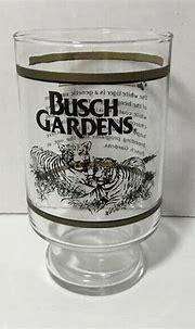 Busch Gardens White Tiger Bengal Amusement Park Tampa Bay ...