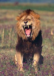 Wildlife Animals Photography