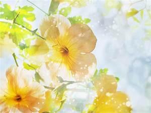 Summer Flowers Screensavers and Wallpaper - WallpaperSafari