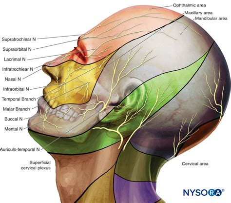 Nerve Blocks of the Face - NYSORA