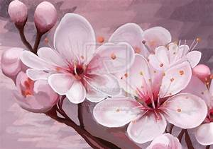 17 Best images about Cherry Blossom / Sakura on Pinterest ...