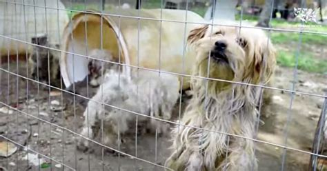 abused animals rescued  hoarding