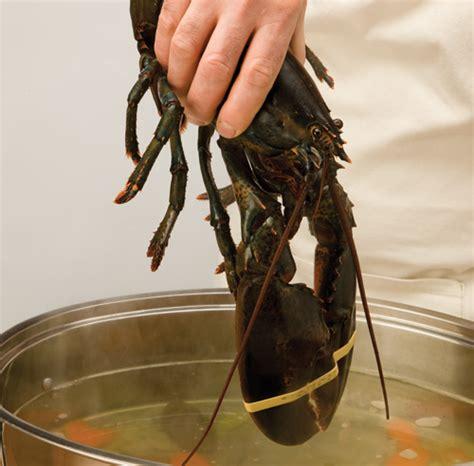 comment cuire le homard trucs et conseils cuisine et nutrition pratico pratique