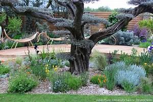 Que planter sous un olivier? Détente Jardin