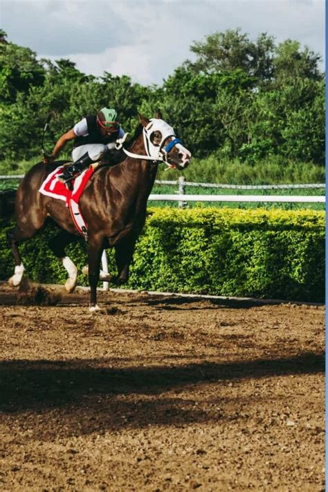 breed horse racing breeds ancient