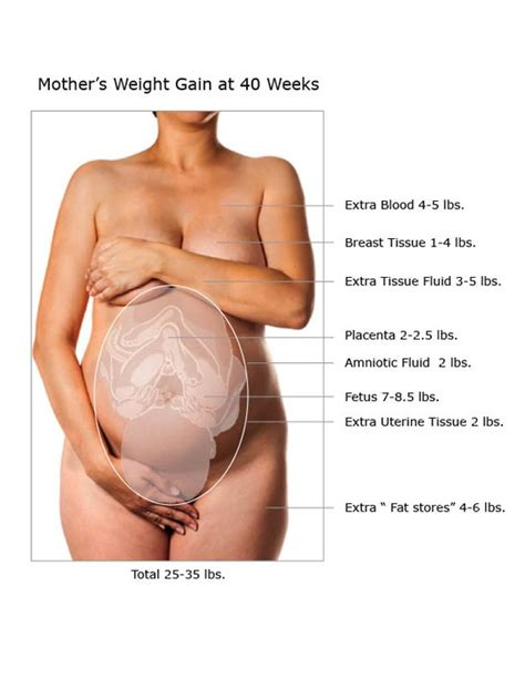 pregnancy weight gain healthy rate  pounds