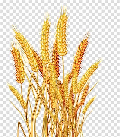 library  wheat seeds clipart black  white stock png