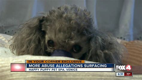 dog abuse claim  local groomer youtube