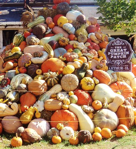 Central Illinois Pumpkin Patches by Pumpkin Patches Amp Apple Orchards