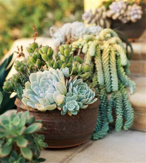 Soeasy Succulent Container Gardens  Midwest Living